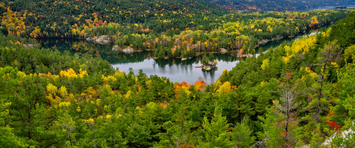 Fall Tress Panorama