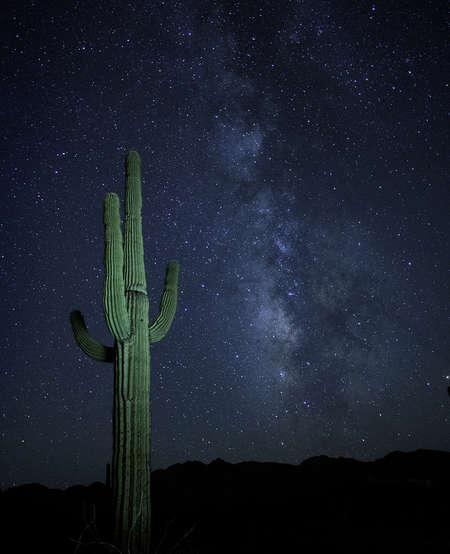 Milky Way with Cactus