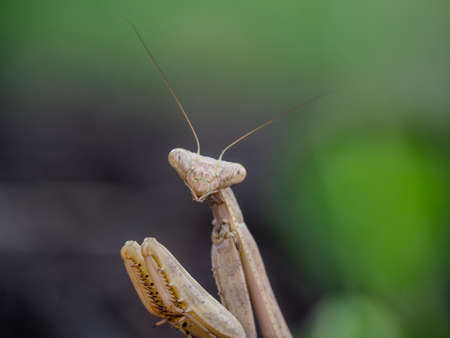 Mantis looking ahead