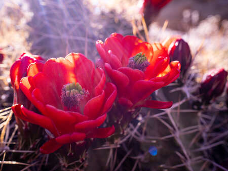 Desert Plant Life