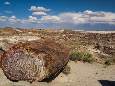 Log in Desert