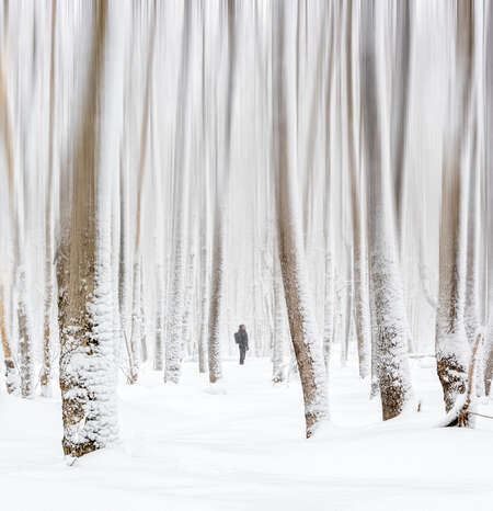 Man Looking Up in Snowy Forest