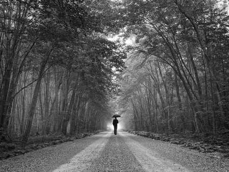 Man With Umbrella on Forest Path