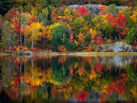 Autumn Colored Forest Reflection on Lake